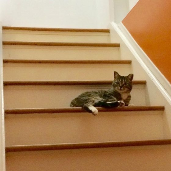 Lily on the stairs